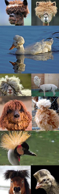 diereninspiratie