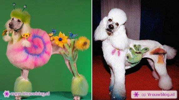 kapsels-honden